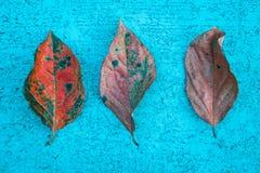 Tre foglie di autunno Fotografia Stock Libera da Diritti