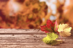 Tre foglie di autunno in giallo e verde rossi Immagini Stock