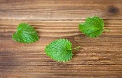 Tre foglie di melissa su legno Immagine Stock Libera da Diritti