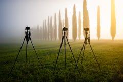 Tre fototripoder med kameror som står i ängen Royaltyfri Bild