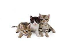 Tre fratelli del gattino Fotografie Stock Libere da Diritti