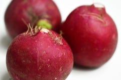Tre freschi e fondo di bianco dei ravanelli rossi dei prodotti naturali immagine stock