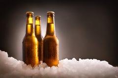 Tre fulla ölflaskor på is och mörk bakgrund royaltyfria bilder