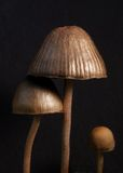 Tre funghi Immagini Stock Libere da Diritti