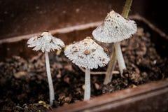Tre funghi Fotografia Stock