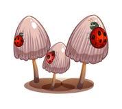 Tre funghi con le coccinelle Immagini Stock Libere da Diritti