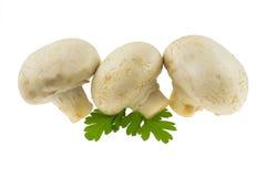 Tre funghi con prezzemolo Fotografia Stock Libera da Diritti