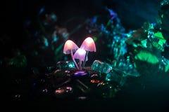 Tre funghi d'ardore di fantasia in primo piano scuro della foresta di mistero Il bello macro colpo del fungo magico o tre anima h fotografie stock
