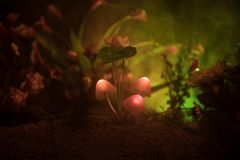 Tre funghi d'ardore di fantasia in primo piano scuro della foresta di mistero Il bello macro colpo del fungo magico o tre anima h immagine stock