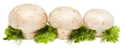 Tre funghi prataioli Fotografie Stock