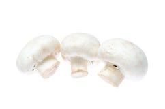 Tre funghi prataioli Fotografia Stock Libera da Diritti