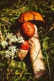 Tre funghi su un'erba verde immagini stock libere da diritti
