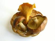 Tre funguss commestibili in cestino Fotografia Stock