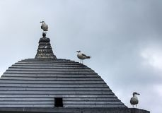 Tre gabbiani che aspettano Godot su un tetto di legno su un mondo grigio e neutrale fotografia stock libera da diritti