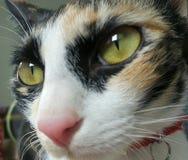 Tre gatti Fotografia Stock Libera da Diritti