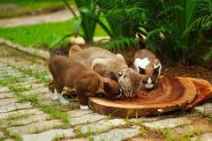 Tre gatti che mangiano cibo per gatti Immagini Stock Libere da Diritti
