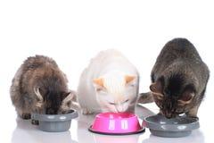 Tre gatti che si siedono alle loro ciotole dell'alimento Immagini Stock