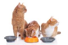 Tre gatti che si siedono alle loro ciotole dell'alimento Fotografia Stock Libera da Diritti