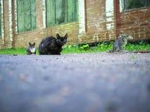 Tre gatti che si siedono sulla terra vicino alla pianta Immagine Stock Libera da Diritti