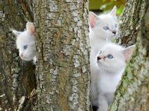 Tre gatti del bambino Immagine Stock