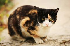 Tre gatti fortunati di colore Fotografia Stock
