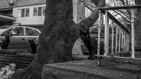 Tre gatti neri sulla via in città Fotografie Stock Libere da Diritti