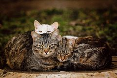 Tre gatti senza tetto Fotografia Stock Libera da Diritti