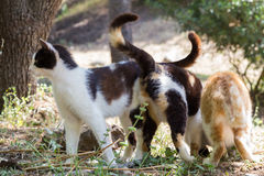 Tre gatti senza tetto Immagine Stock Libera da Diritti