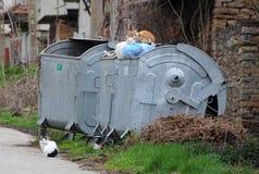 Tre gatti smarriti sul contenitore dell'immondizia Immagine Stock