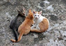 Tre gattini Fotografie Stock