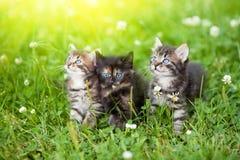 Tre gattini Immagini Stock