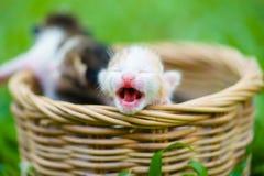 Tre gattini neonati che si siedono nel canestro di vimini sull'erba verde immagine stock libera da diritti