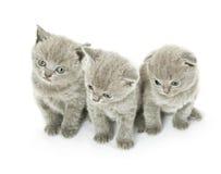 Tre gattini sopra bianco Immagine Stock