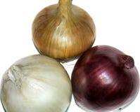 Tre generi di colori e di cipolla Immagine Stock
