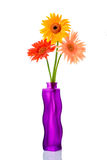 Tre gerberas in un vaso di fiore immagine stock libera da diritti
