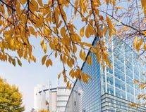 Tre giallo della foglia visto attraverso costruzione della facciata del Parlamento Europeo Fotografia Stock Libera da Diritti