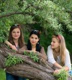 Tre giovani belle signore che posano nel parco Fotografia Stock