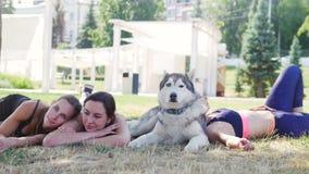 Tre giovani donne si trovano e si rilassano sull'erba nel parco con un cane del husky video d archivio
