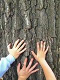 Tre giovani mani su un albero Fotografia Stock
