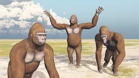 Tre gorille Fotografia Stock Libera da Diritti