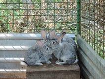 Tre gråa kaniner som sitter i en bur royaltyfria bilder
