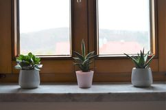Tre gröna kaktusväxter på en fönsterbräda i rad som garnering som hemma inspirerar idén för sovrummet arkivbild