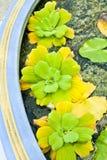 Tre grönsallater Royaltyfria Foton