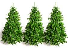 Tre grenngranträd Arkivfoto