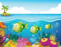 Tre gröna piranhas under havet Arkivbilder