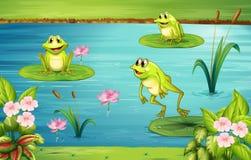 Tre grodor som bor i dammet royaltyfri illustrationer