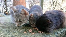Tre gulliga hemlösa katter royaltyfri bild