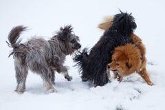 Tre gulliga hundkapplöpning i snowen royaltyfri fotografi