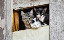 Tre gulliga katter Arkivfoto