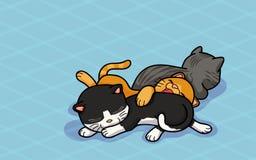 Tre gulliga katter sover Arkivfoton